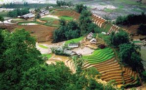 La vallée de Sa Pa entre minorités ethniques et rizières (3jours/ 4nuits)