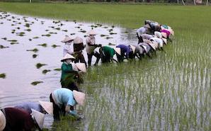Ninh Binh sous un autre nom «la baie d'Ha Long terrestre»(2jours/1nuit)